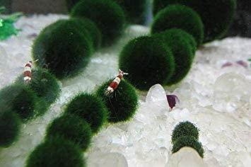 Aquarium Equip MB2-3cm*6pc product image 5