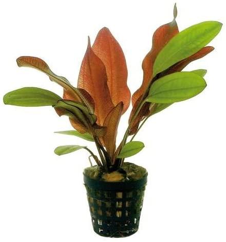 Aquarium Plants Discounts  product image 7