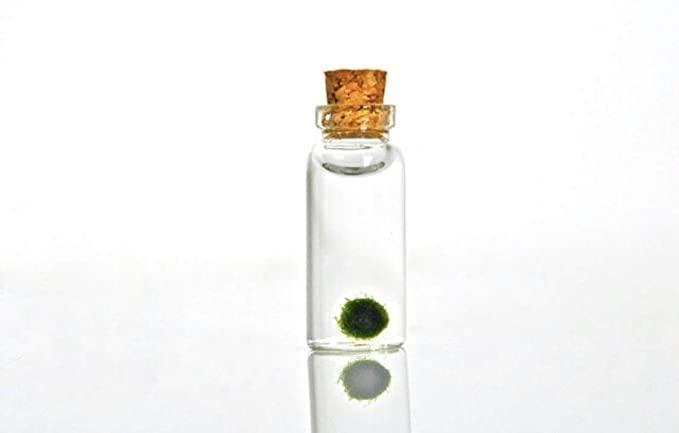Sova Marimo  product image 5