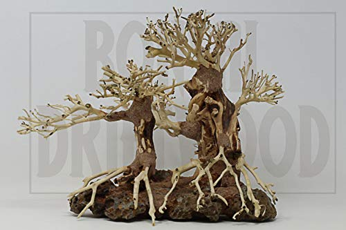 Bonsai Driftwood  product image 7