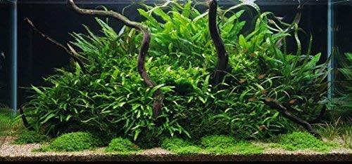 Greenpro  product image 6