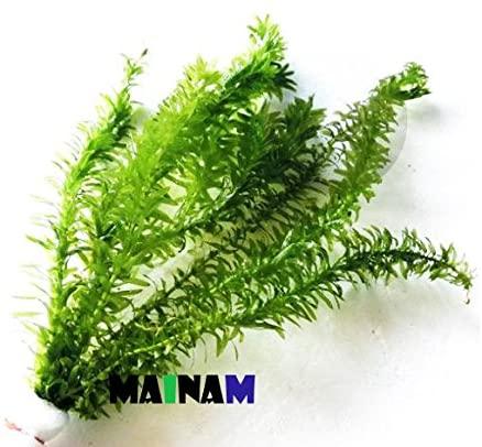 Mainam  product image 5