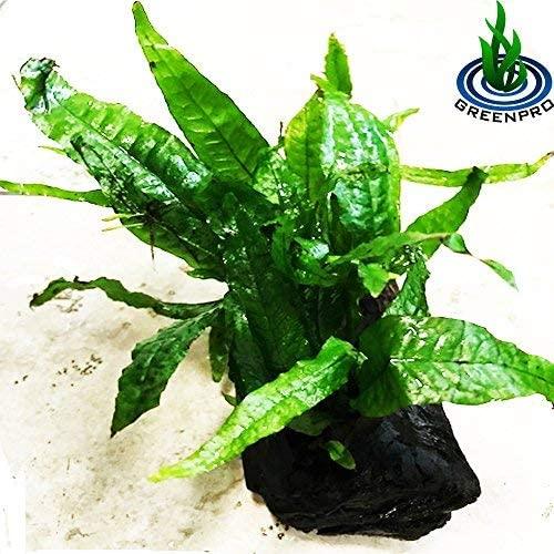 Greenpro  product image 7