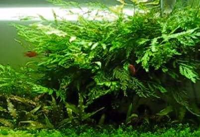 Greenpro  product image 8