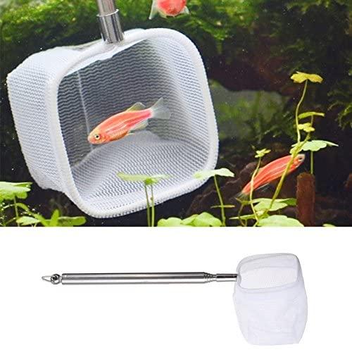 Kangkang  product image 6