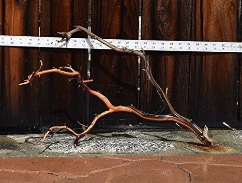 Manzanita Driftwood  product image 3
