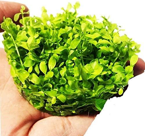 Planterest  product image 4