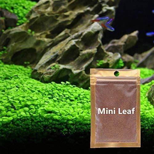 Wpmlady  product image 1