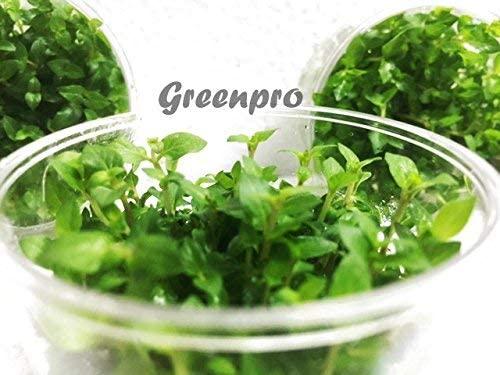 Greenpro LC378 product image 11