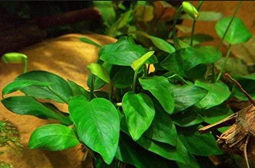 Greenpro  product image 2