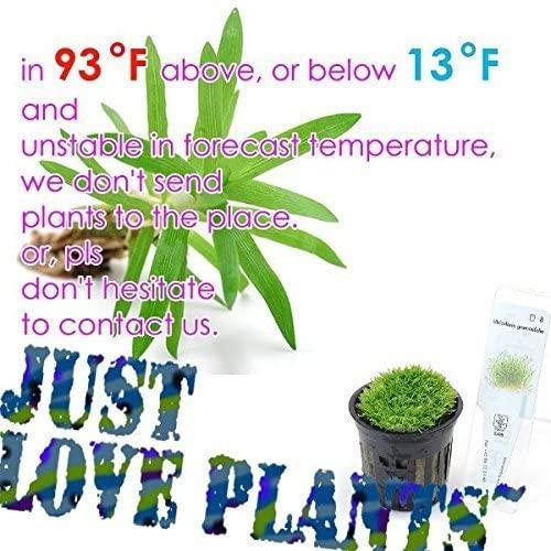 Aquarium Live Water Plants A05 product image 7
