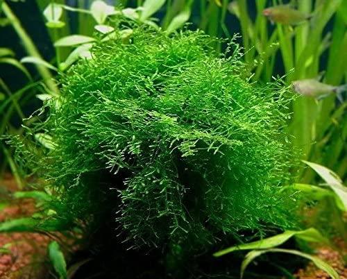 Aquarium Plants Discounts  product image 5