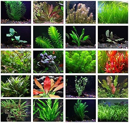 AquaLeaf Aquatics  product image 9