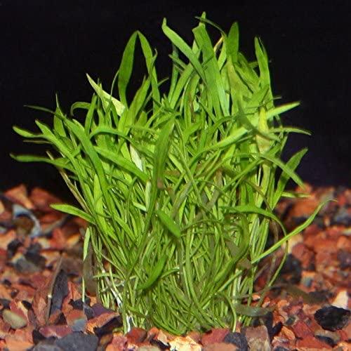 Aquarium Plants Discounts  product image 3
