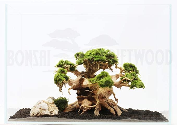 Bonsai Driftwood  product image 5