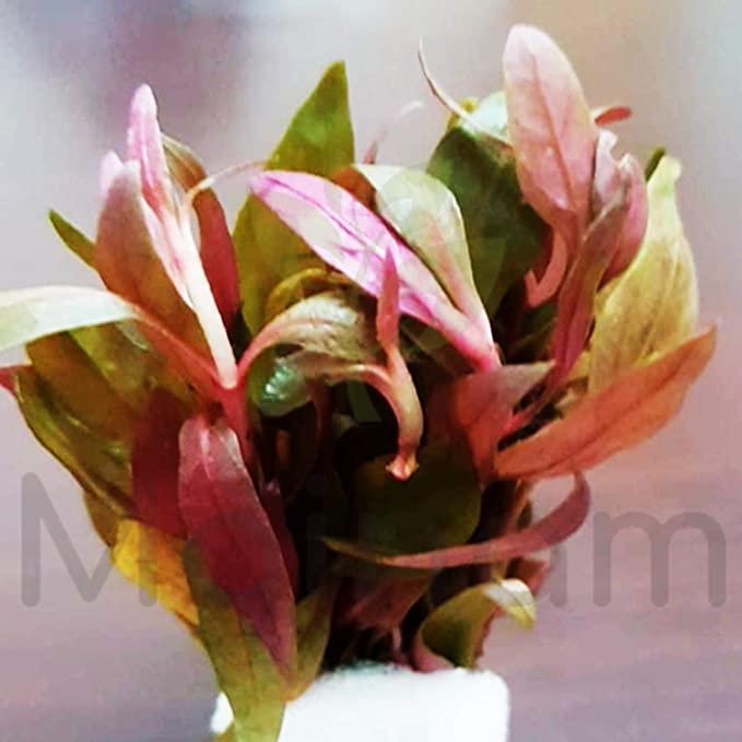 Mainam  product image 4