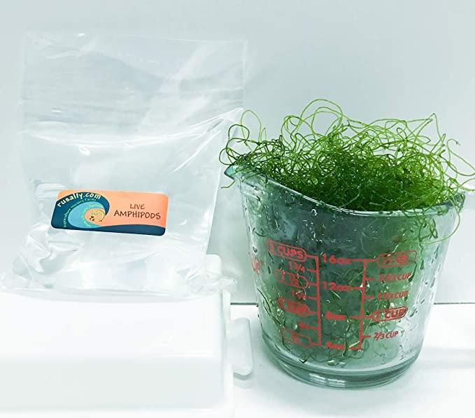 AQUACULTURE NURSERY FARMS C12 product image 10