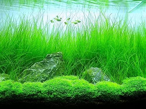 Aquarium Plants Discounts  product image 7