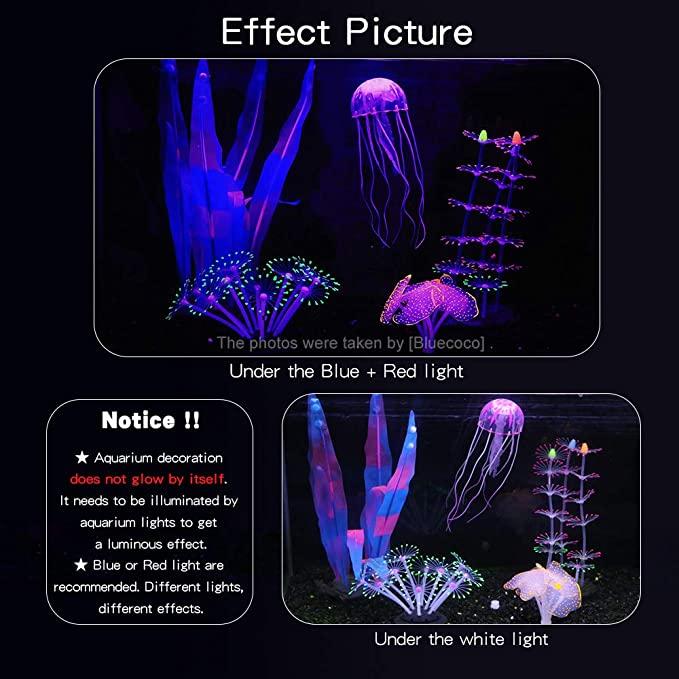 Bluecoco  product image 10