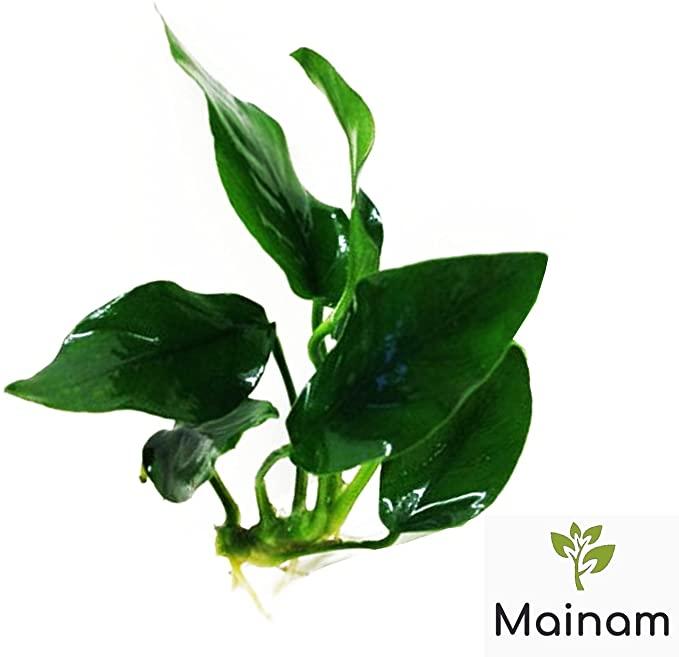 Mainam  product image 7