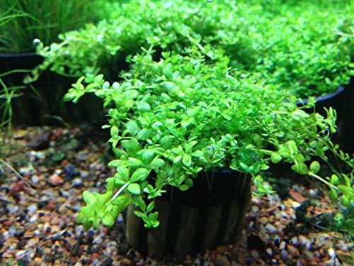 Aquarium Plants Discounts  product image 2