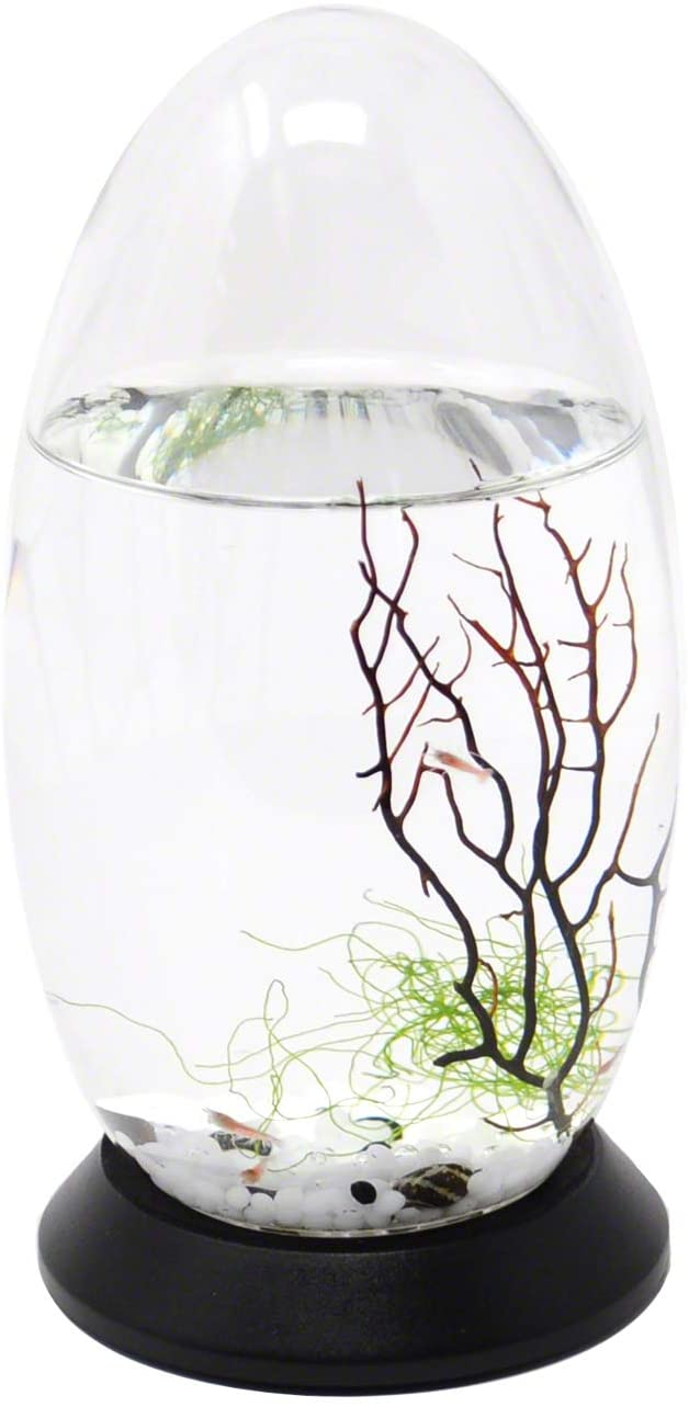 EcoSphere Small Pod with Base product image 11