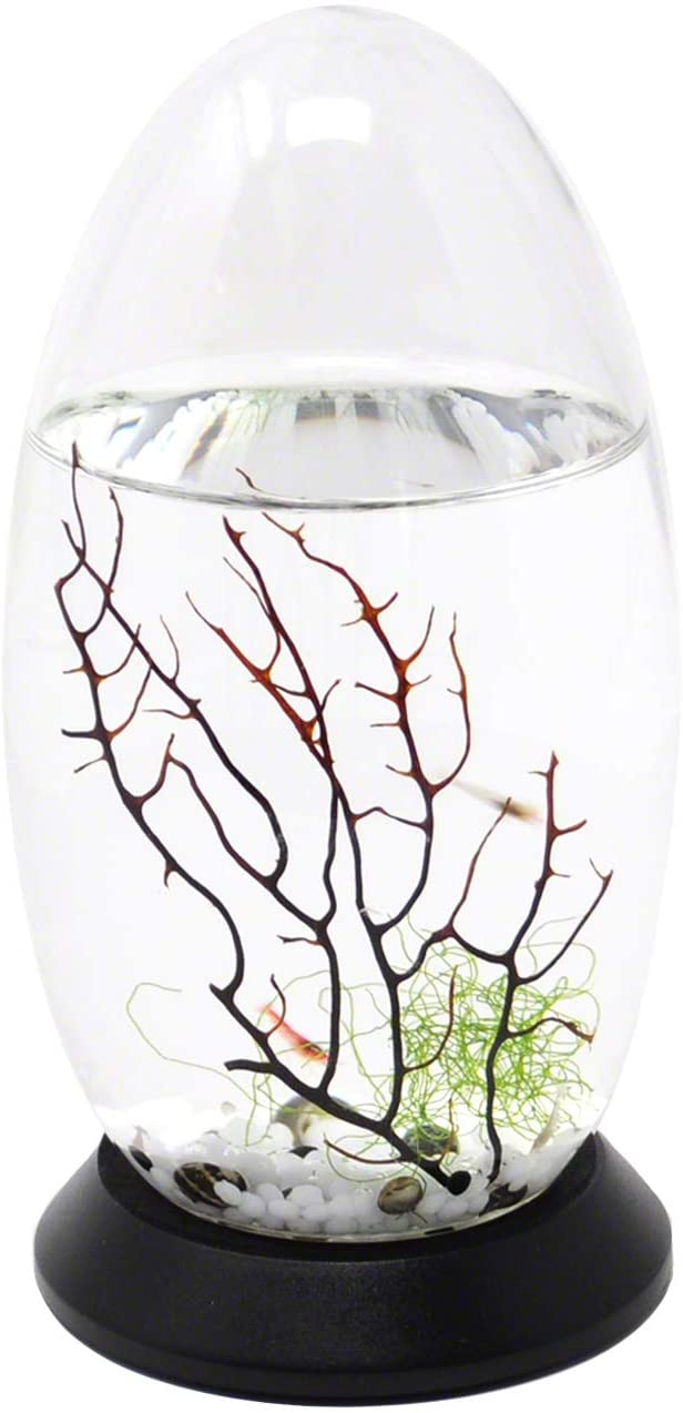 EcoSphere Small Pod with Base product image 3