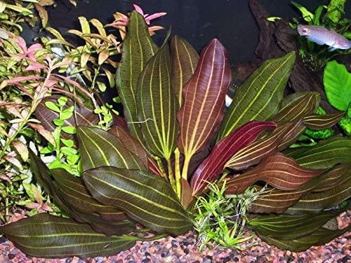 Aquarium Plants Discounts  product image 8