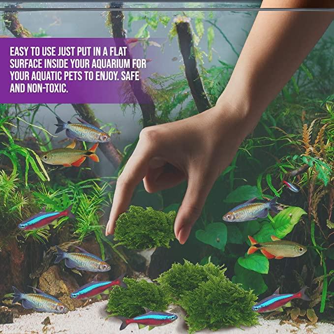 Aquarium Live Water Plants  product image 9