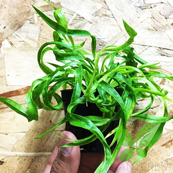 Planterest P379 product image 4