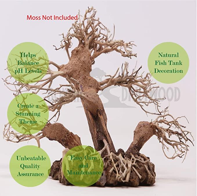 Bonsai Driftwood  product image 3