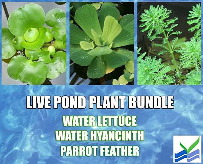 Aquarium Plants Discounts  product image 1