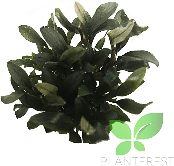 Planterest LS902 product image 11