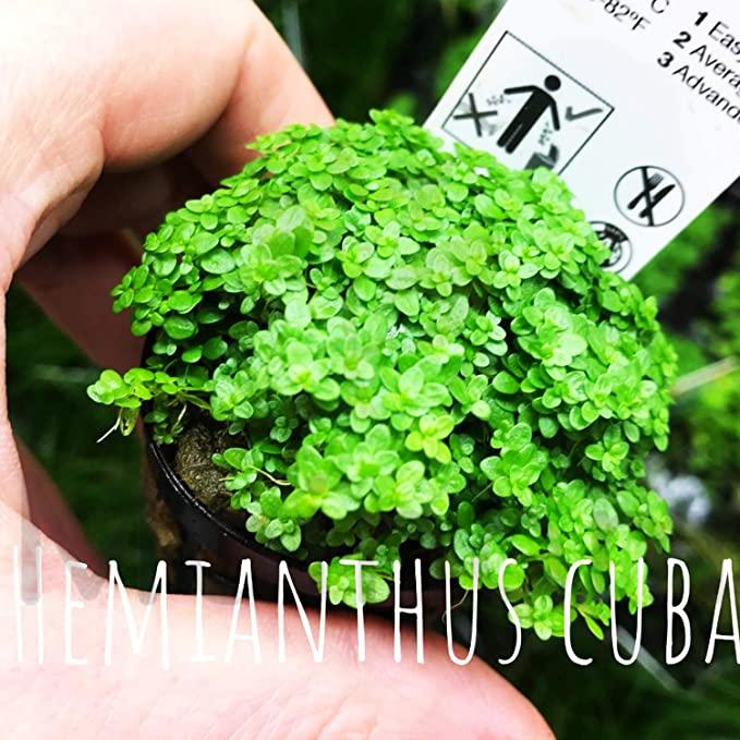 Mainam  product image 8
