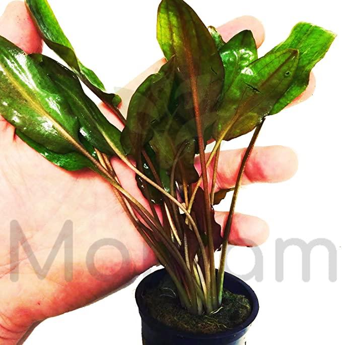 Mainam P052 product image 7