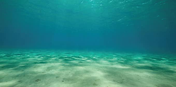 Aquatic Creations 879542004117 product image 1