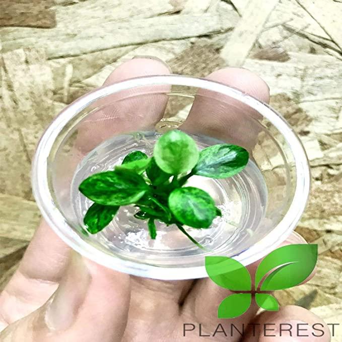Planterest LS314 product image 3