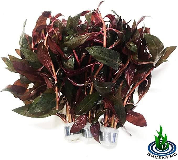 Greenpro 3xB090 product image 10