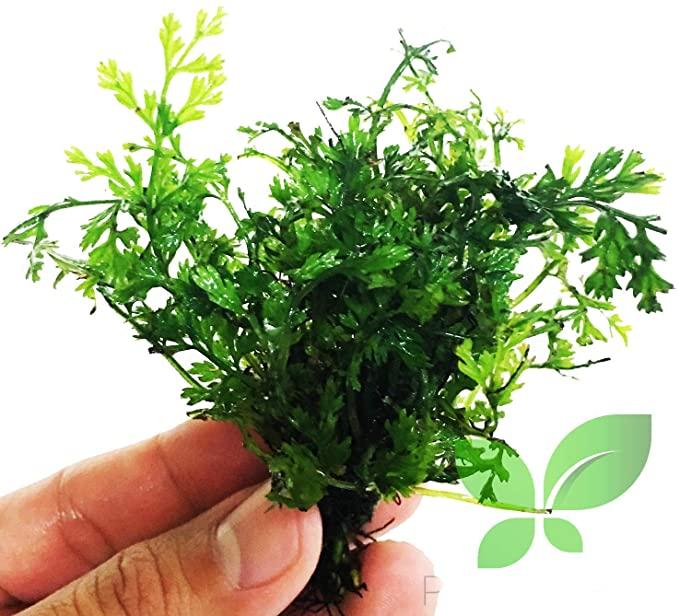 Planterest L344 product image 9