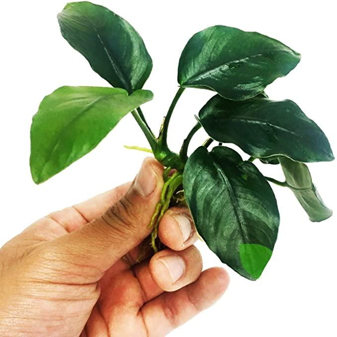 Planterest L179 product image 10