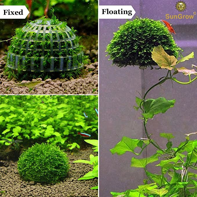 SunGrow  product image 4