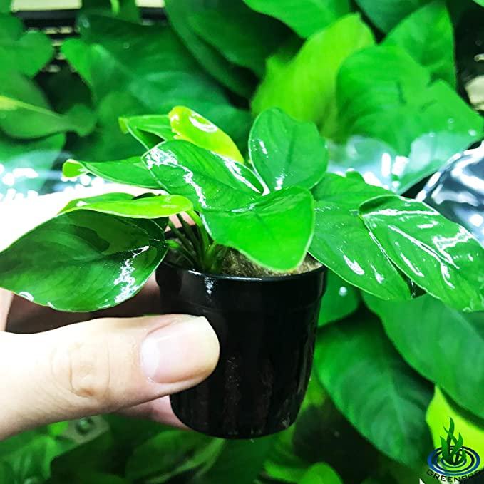 Greenpro P019 product image 11