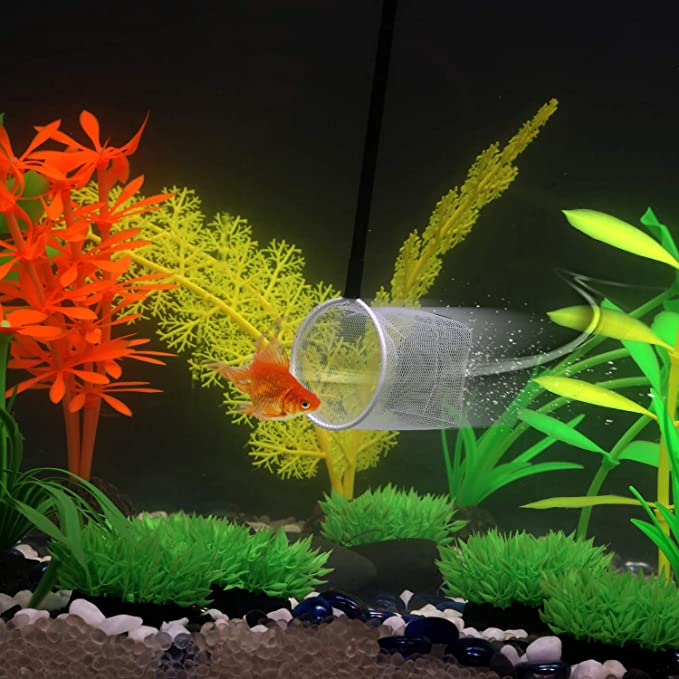 Carefree Fish 3D product image 4
