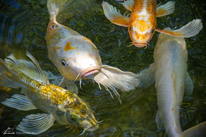 Aquascape 98868 product image 8