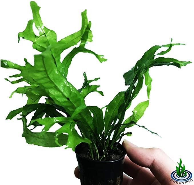 Greenpro P345 product image 10