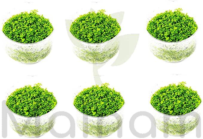Mainam  product image 10