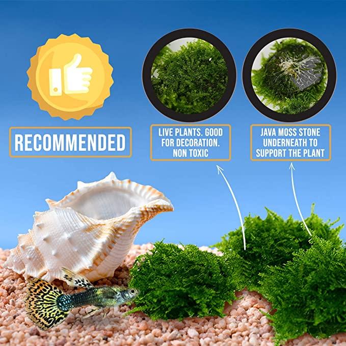 Aquarium Live Water Plants  product image 3