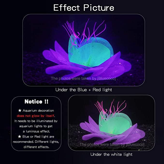 Bluecoco  product image 3