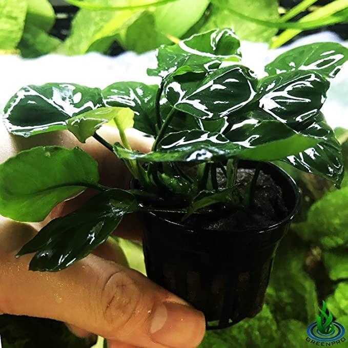 Greenpro L293 product image 5