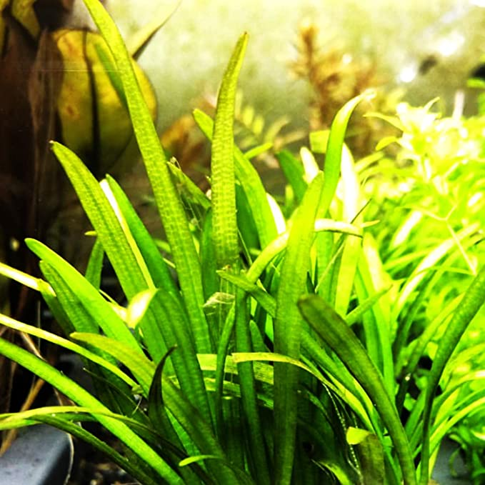 Planterest  product image 8